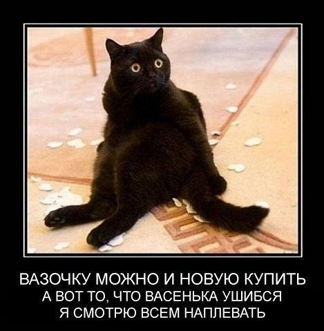 Черный кот в народе