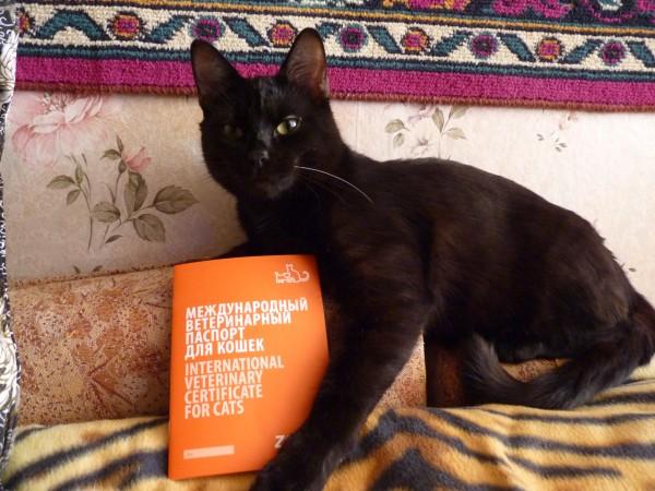 Кот теперь как прям человек с паспортом =)